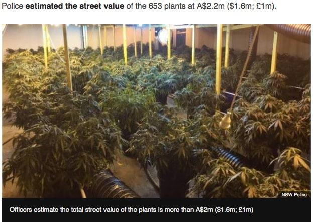 sidney kabel cannabis