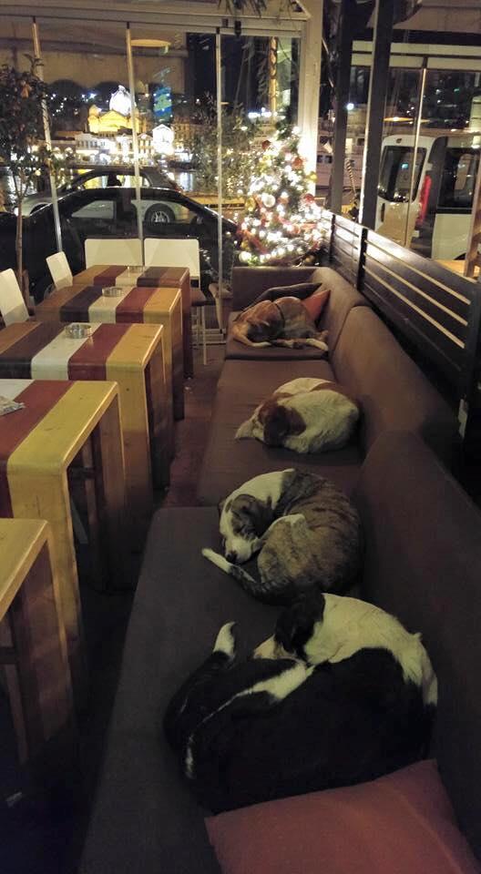 obdachlose hunde dürfen im café schlafen