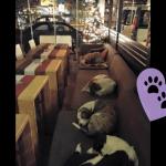 Obdachlose Hunde finden in diesem Café jede Nacht einen Schlafplatz