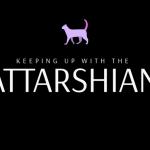 Island launcht Katzen-Live-Stream für einen guten Zweck