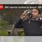 Reporter von Lemuren überfallen!